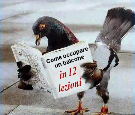 Come allontanare piccioni ed uccelli dai balconi | de matha