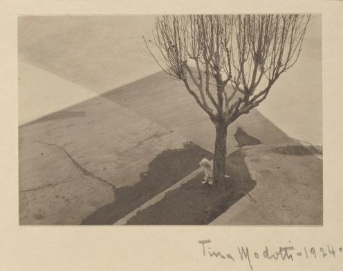 tina modotti - albero con cane (getty museum)